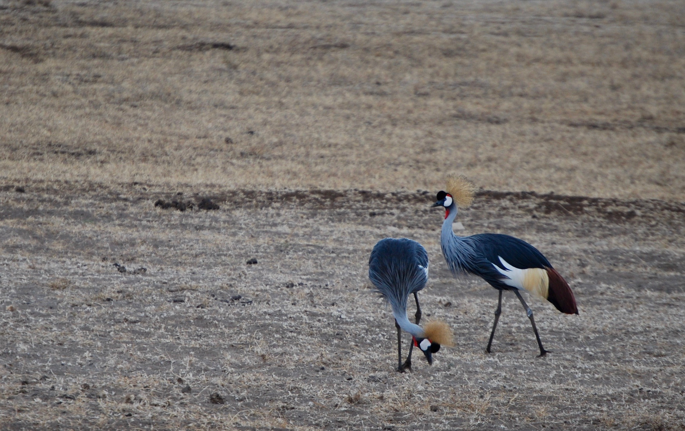 We saw these beauties in the Ngorongoro Crater.